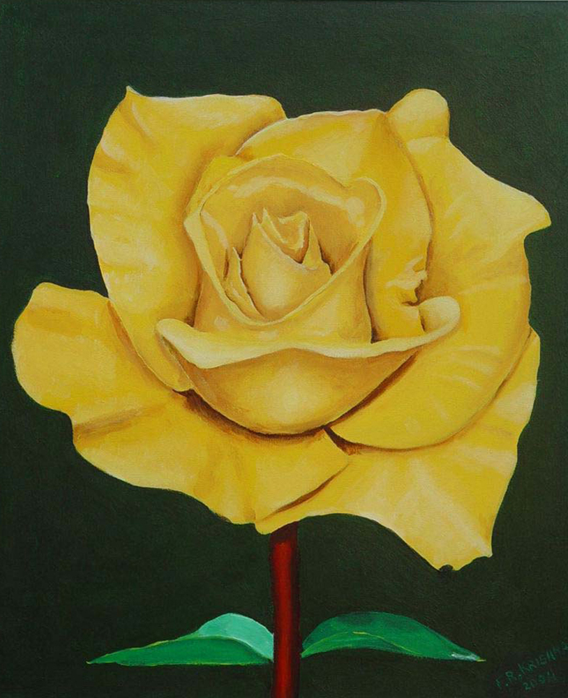 08 Pili Gulaab Yellow Rose